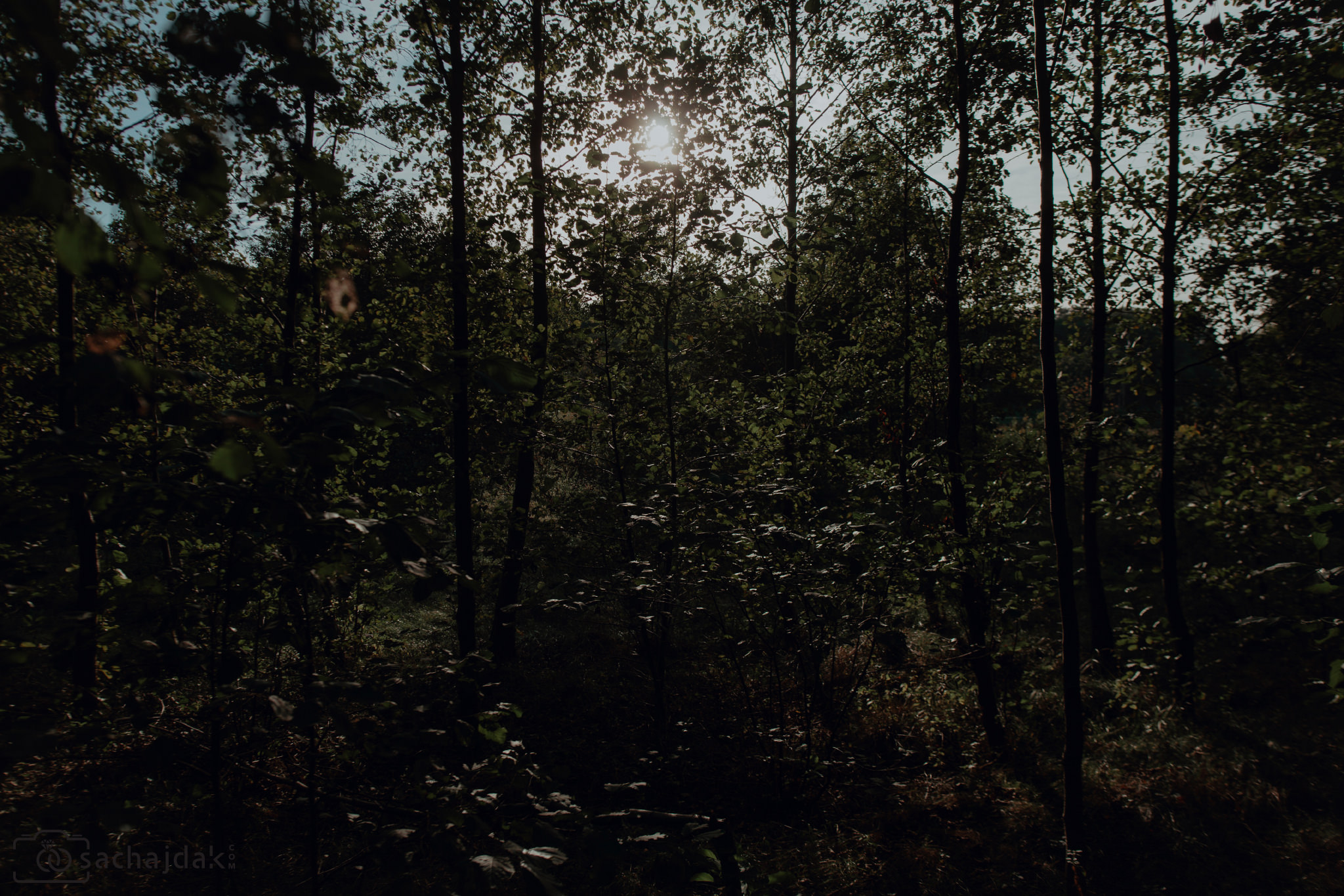 Sesja ślubna las jezioro
